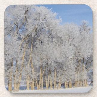 Pogonip Frost on Trees Cork Coasters