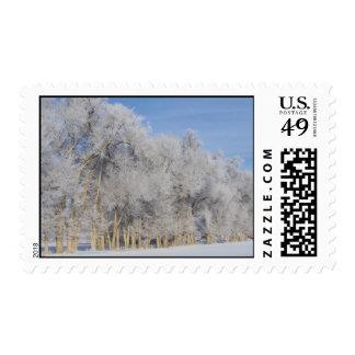 Pogonip Ice Frost Postage Stamp