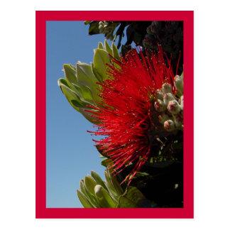Pohutakawa Blossom Postcard