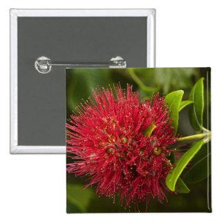 Pohutukawa Flower, Dunedin Button