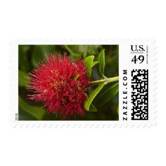 Pohutukawa Flower, Dunedin Postage Stamps