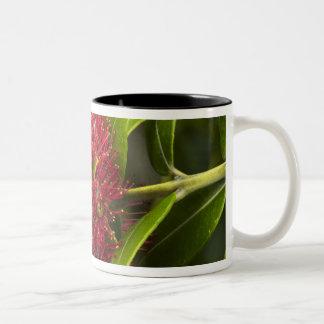Pohutukawa Flower, Dunedin Two-Tone Coffee Mug