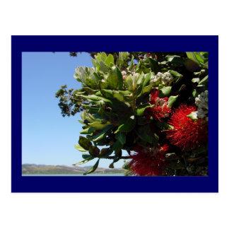 Pohutukawa Tree and Blossom Postcard