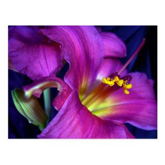 Poignant Poetic Purple Lily Postcard
