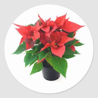 Poinsetta In The Pot Round Stickers
