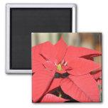 Poinsettia 2 Inch Square Magnet