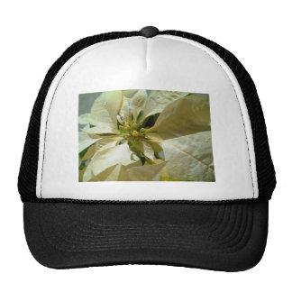 Poinsettia amarillo claro 1 gorro