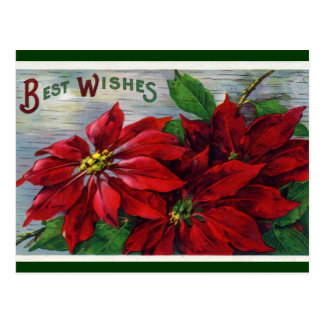 Poinsettia Best Wishes Postcard