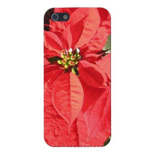 Poinsettia Case For iPhone 5