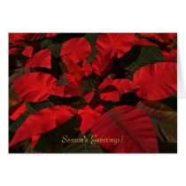 holiday, christmas, poinsettia, flowers, red, Card with custom graphic design