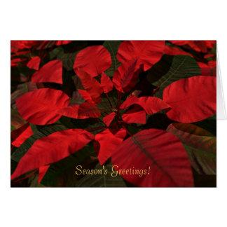 """""""Poinsettia"""" Christmas Card"""