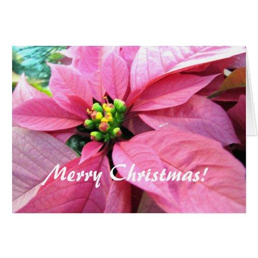 Poinsettia Christmas Greeting Card