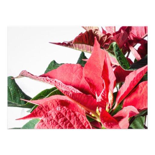 Poinsettia del navidad invitaciones personales