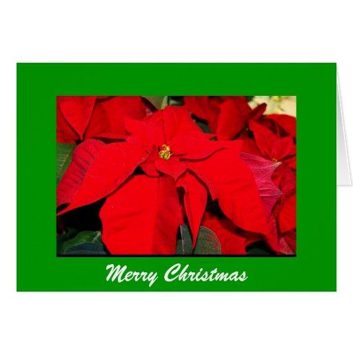 Poinsettia, Felices Navidad Tarjeta De Felicitación