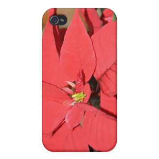 Poinsettia Cover For iPhone 4