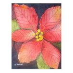 Poinsettia pacífico tarjetas postales