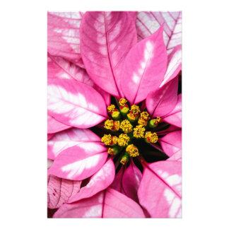 Poinsettia Papelería De Diseño