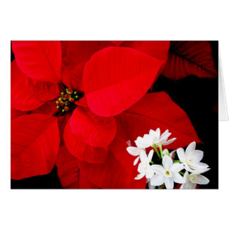 Poinsettia & Paperwhite Christmas Card