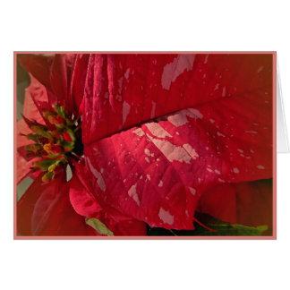 Poinsettia Photo Design Christmas/Holiday Greeting Card