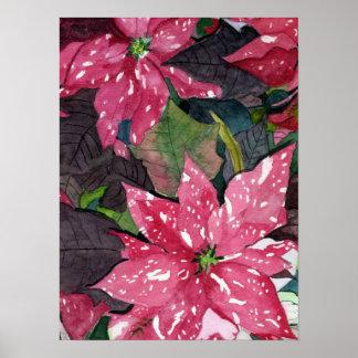 Poinsettia Print