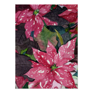 Poinsettia Posters