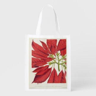 Poinsettia Pulcherrima (colour litho) Grocery Bags