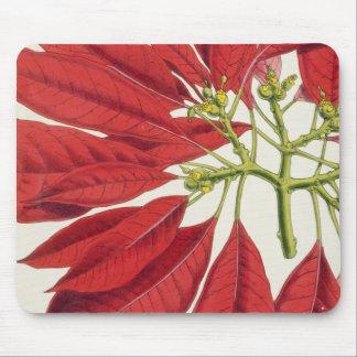 Poinsettia Pulcherrima (colour litho) Mouse Pad