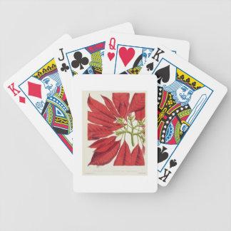 Poinsettia Pulcherrima (colour litho) Card Decks