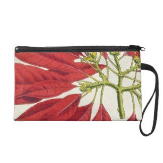 Poinsettia Pulcherrima (colour litho) Wristlet