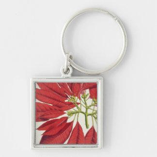 Poinsettia Pulcherrima (litho del color) Llavero Cuadrado Plateado