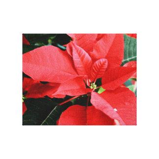 Poinsettia rojo brillante del navidad impresión en lona estirada