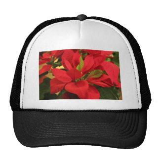 Poinsettia rojo gorro