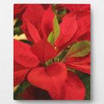 Poinsettia rojo placas de madera