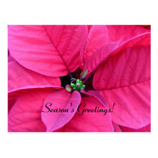 Poinsettia Season's Greeting Cards