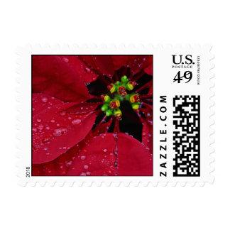 Poinsettia Small Stamp