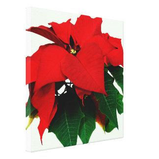 Poinsettia y hojas lienzo envuelto para galerías