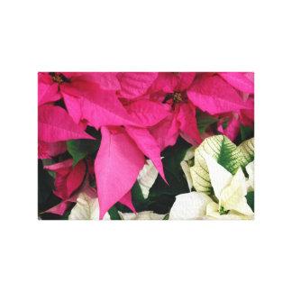Poinsettias del navidad rosado y blanco lona estirada galerias
