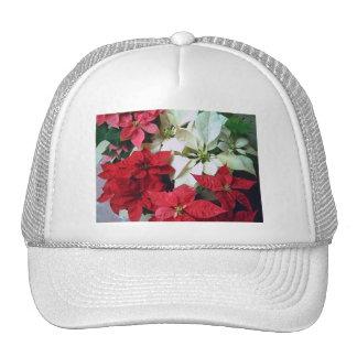 Poinsettias mezclados 1 del color gorras de camionero