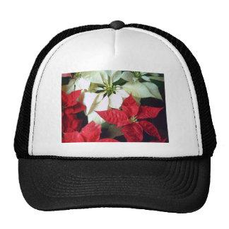 Poinsettias mezclados 2 del color gorras