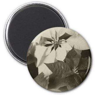 Poinsettias mezclados Antiqued 2 del color Imán Redondo 5 Cm