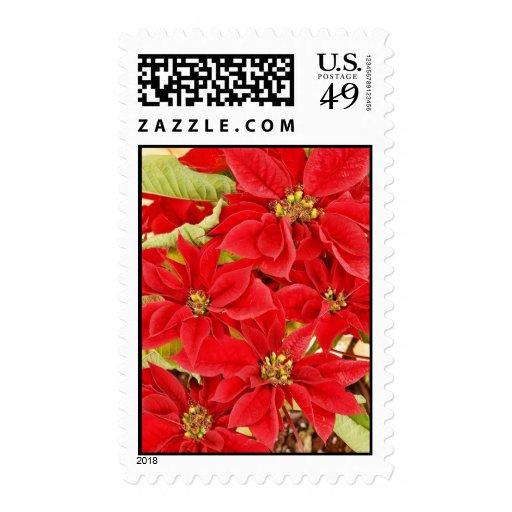 Poinsettias rojos festivos sellos