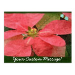 Poinsettias rosados 5 postal