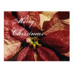 poinsitta, Merry, Christmas - Customized post card