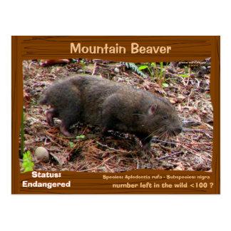 Point Arena Mountain Beaver endangered - - - Postcard