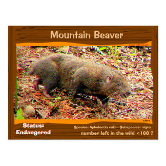 Point Arena Mountain Beaver endangered - - - Postcard