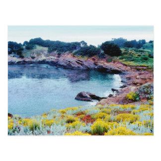 Point Lobos Postcard
