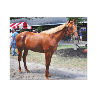 Point of Entry Colt Canvas Print