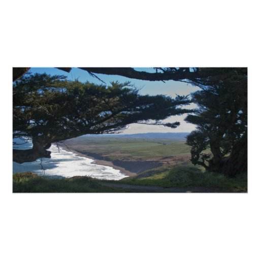 Point Reyes Among Trees Poster