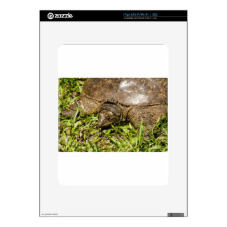 Pointed Long Nose Florida Softshell Turtle Skin For The iPad