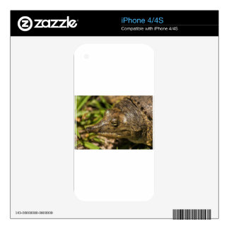 Pointed Nose Florida Softshell Turtle Skin For The iPhone 4